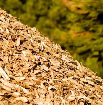 biomassa-2-356x364 home